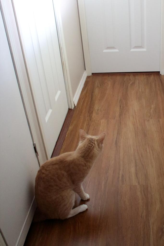 Cat Frankie with new doors