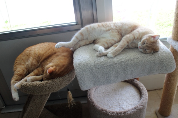Cute cats napping