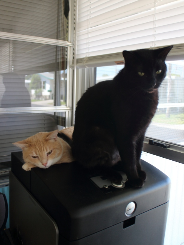 Cats on printer