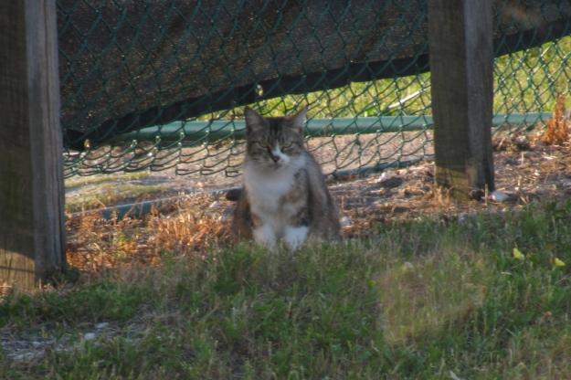 20160413_Feral cats_074