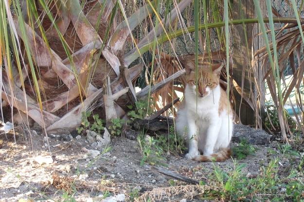 20160425_Feral cats_0084