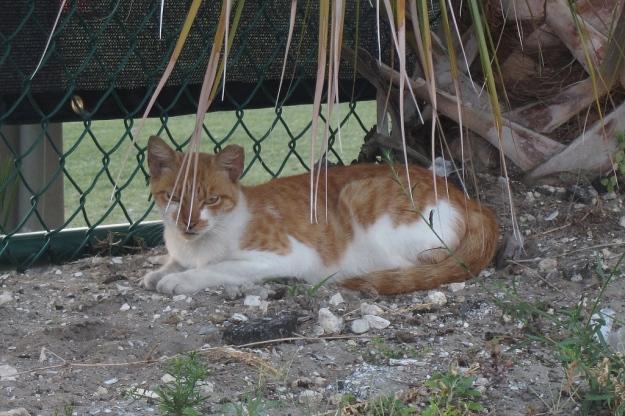 20160502_Feral cats_0086