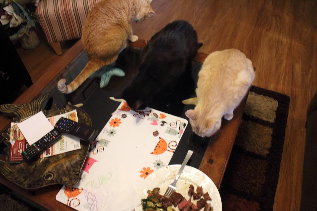 3 cats eating steak