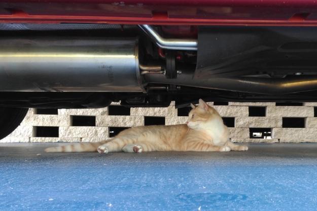CAT UNDER TRUCK