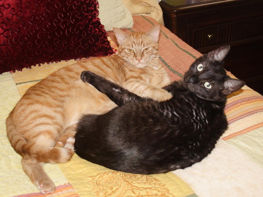 Cats Tigger and Alex