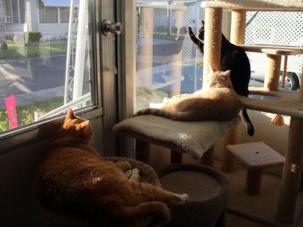 Cats in the sun