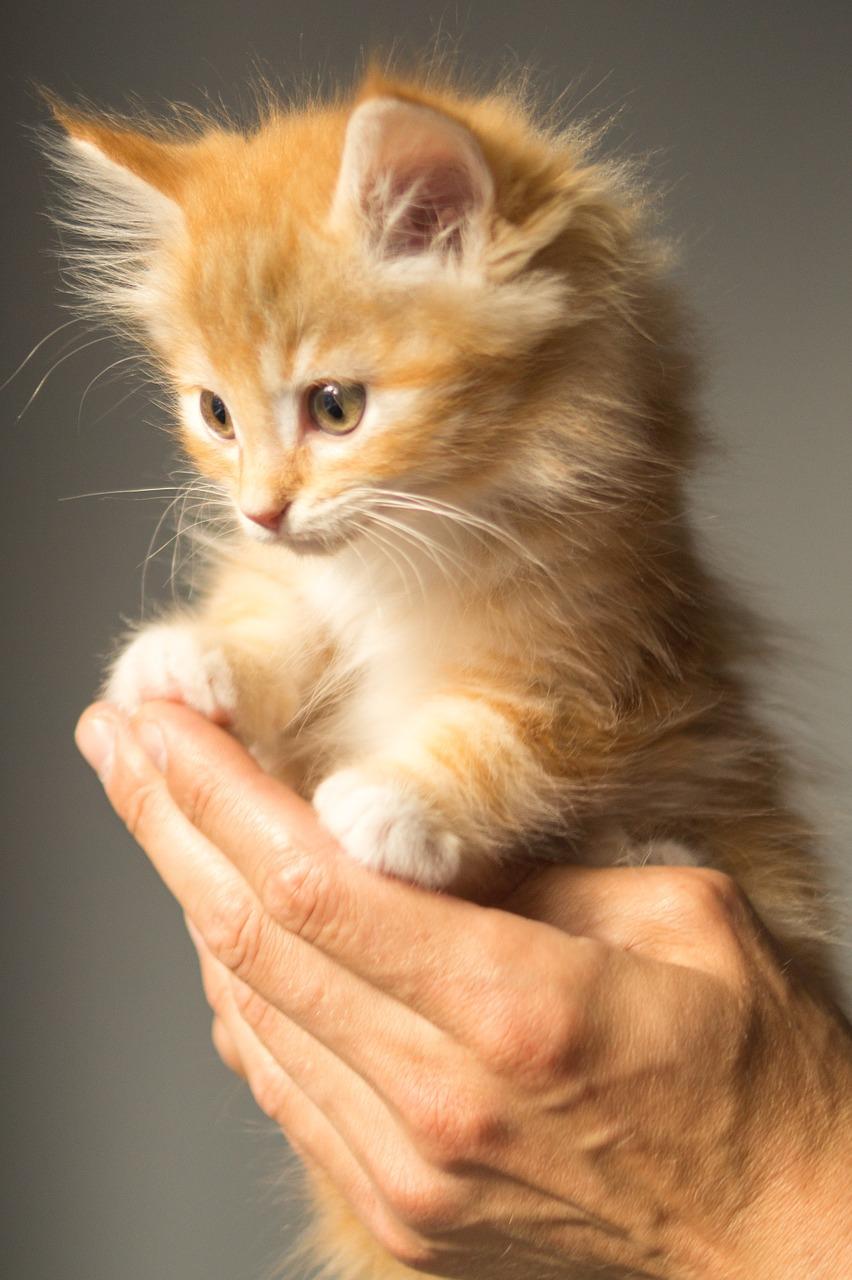 kitten-943275_1280