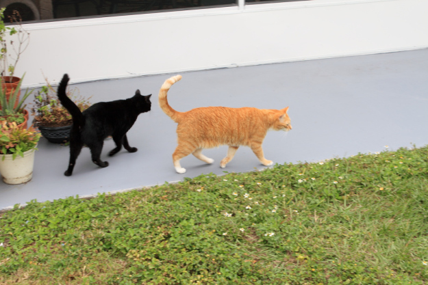 Bad Cat Chris and Puck outside