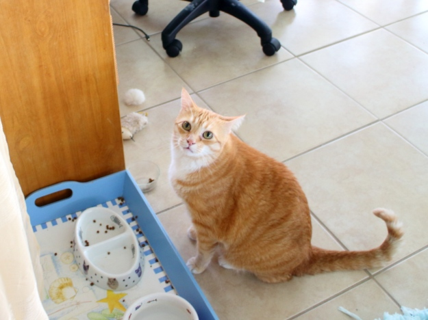 Cat Won T Eat Food But Is Hungry