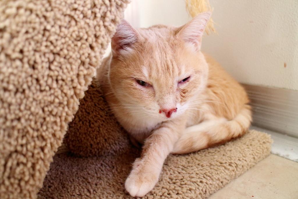 20160718_Cats_2267 Frankie