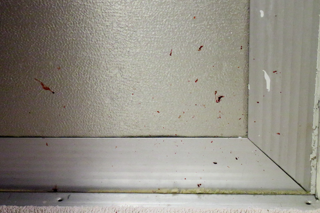 20160719_Cats_2268 blood on door