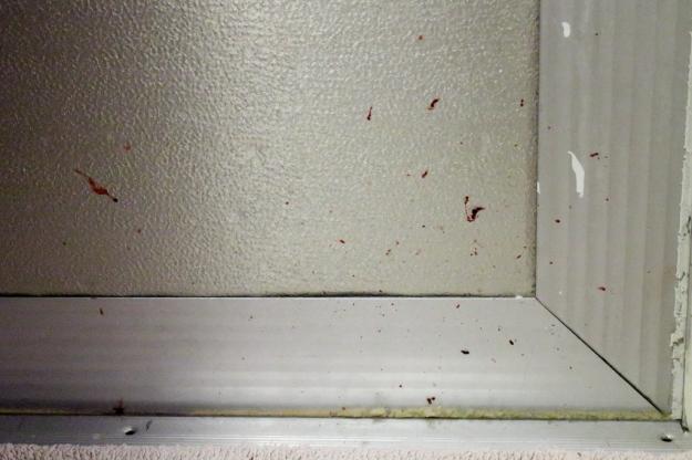 20160719_Cats_2268 blood on door