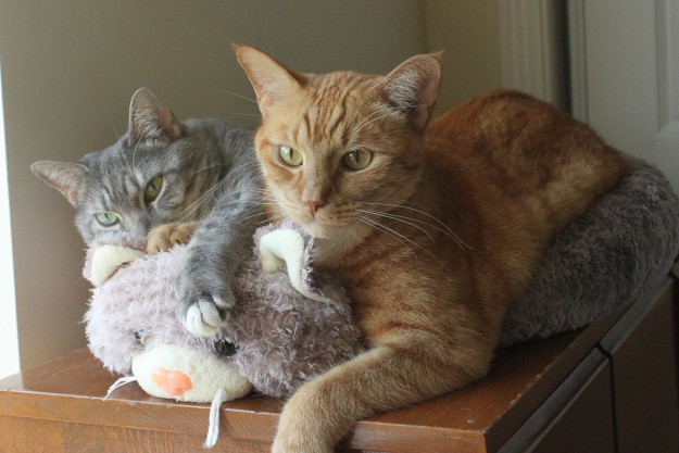 Abbey and Tigger in Abbey's cat bed.