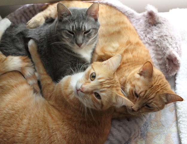 Abbey, Chris and Tigger in Abbey's cat bed.