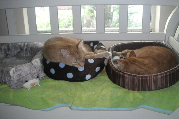 Chris and Tigger in thier cat beds