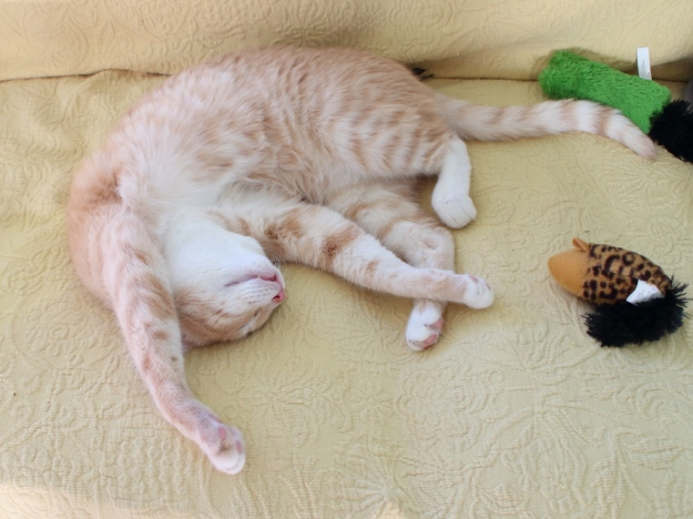 20160726_Cats_278-Frankie