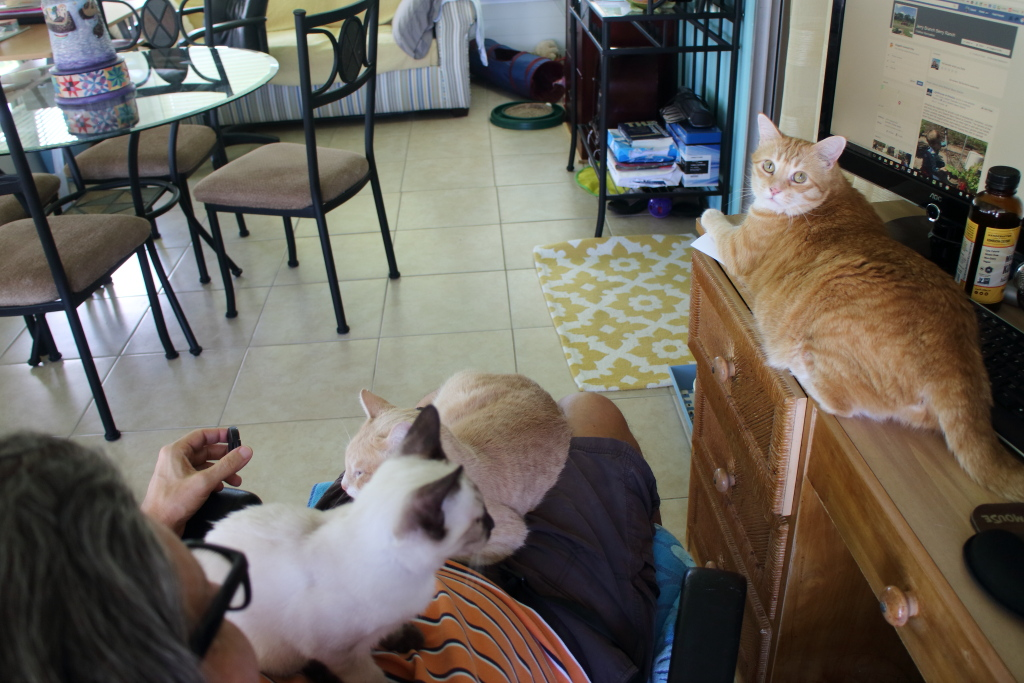 cats on lap