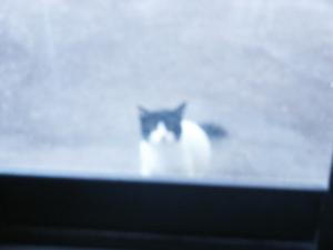 Casper the Friendly Cat