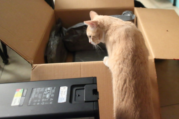 Cat and computer box