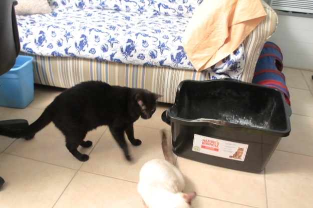 cats by litter box