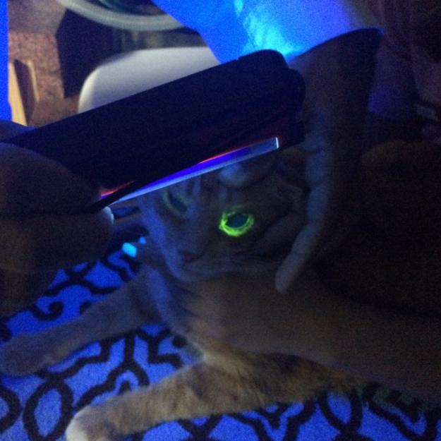 bad cat Chris at vet