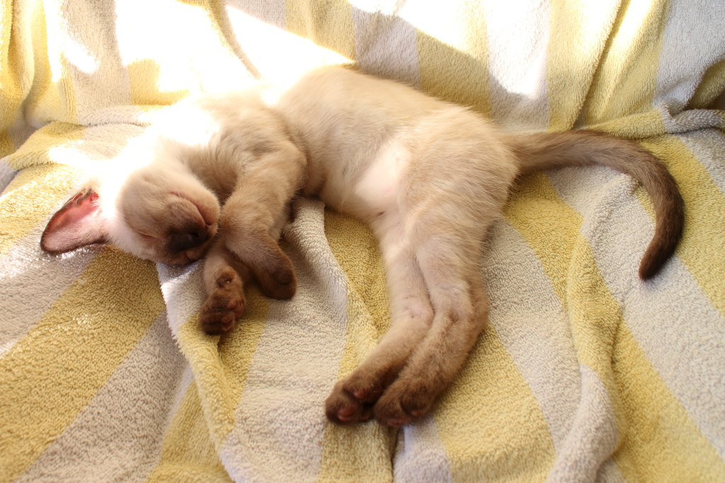 Floki the kitten sleeping