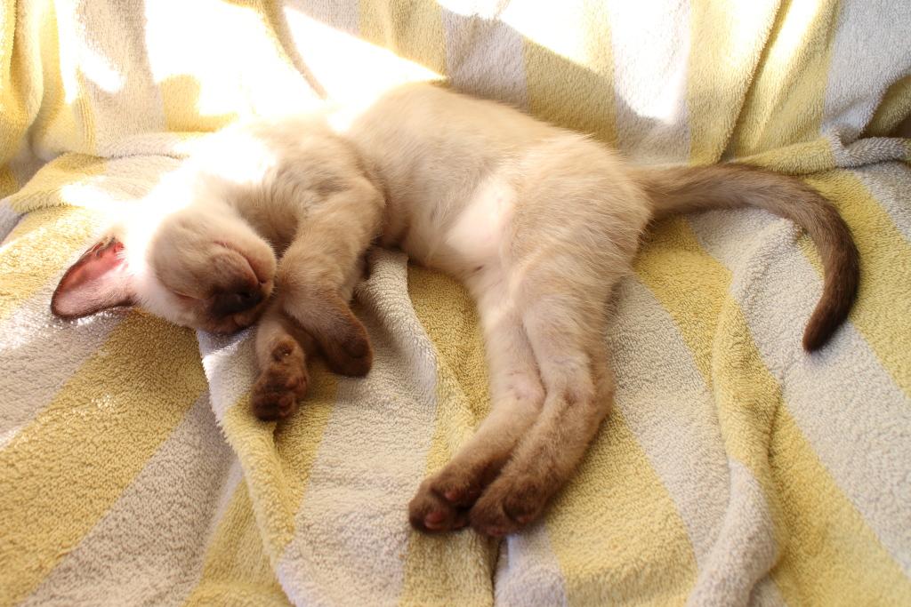 Floki the kitten sleeping
