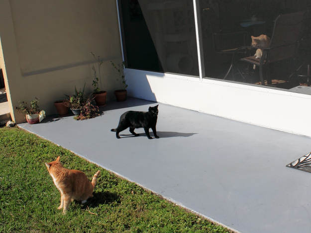 Our cats Chris and Puck outside with Frankie inside.