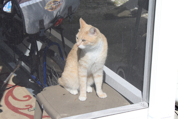 Our cat Frankie watching Chris and Puck from inside