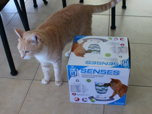 Cat Frankie with Catit Senses Treat Maze