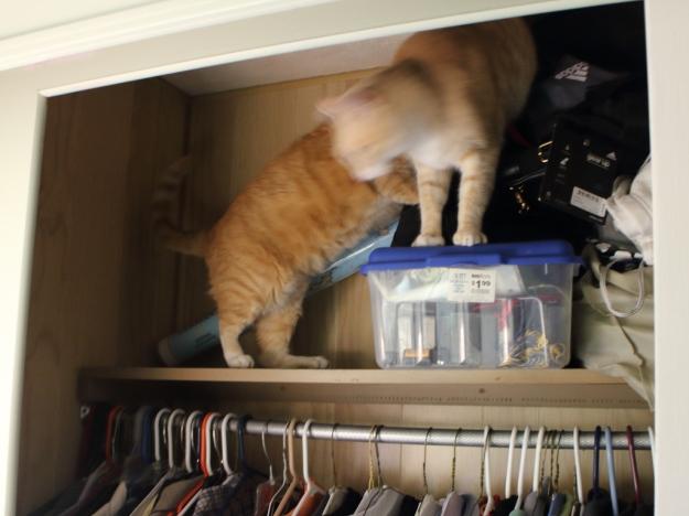 cats in closet
