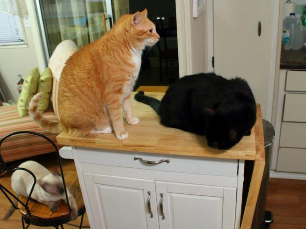 Cats on kitchen utility cart