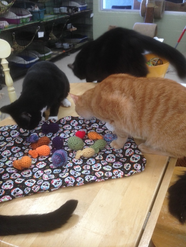 cats with toys at sav-r-cats cat shelter