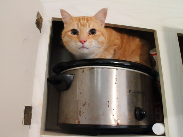 cat Chris in cabinet