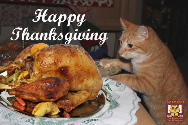Happy Thanksgiving - Bad Cat Chris with turkey