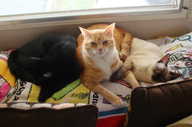 cats Puck, Chris and Floki