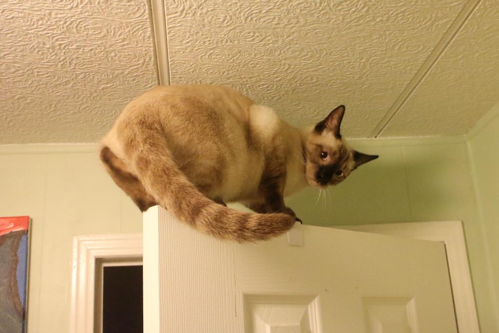 kitten on top of door