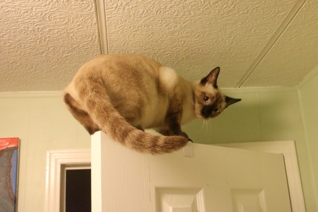 kitten on top of door