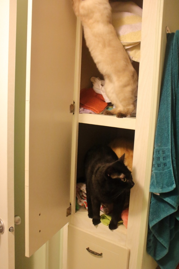 cats and kitten in cabinet