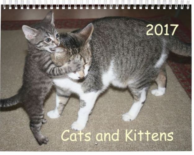 Cats and Kittens calender