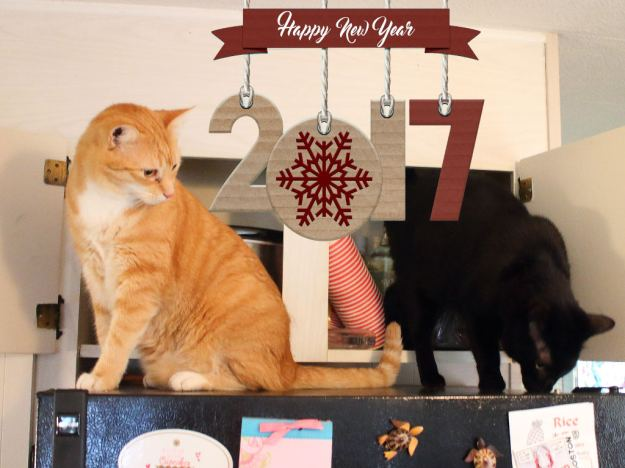 Happy New Year 2017 with cats