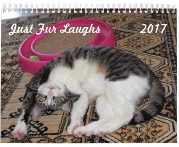 Just Fur Laughs funny animal, cat calendar