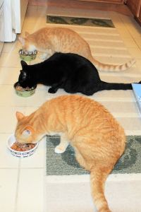 Our cats eating
