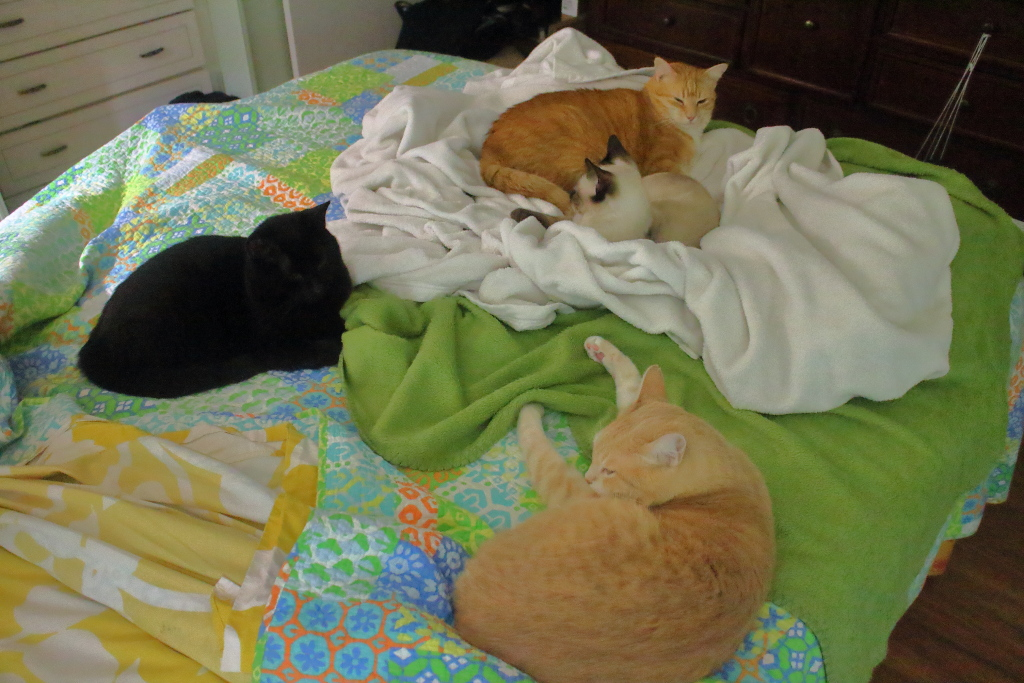 cats on bed