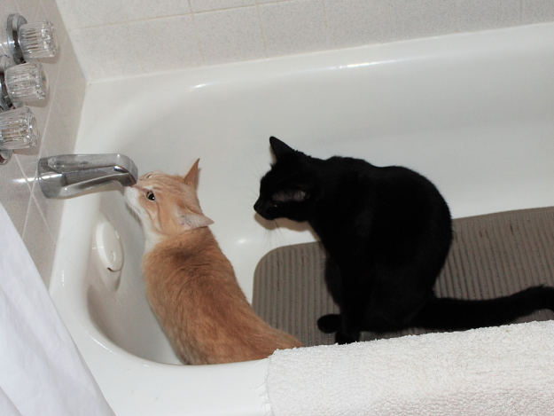 Our cats Frankie and Puck in the tub