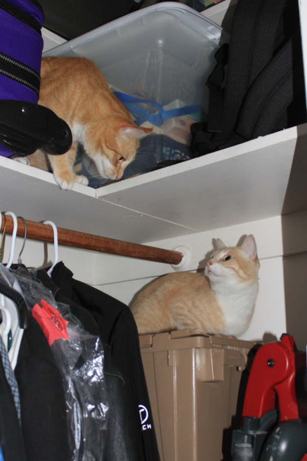 Our cats Chris and Frankie in the closet