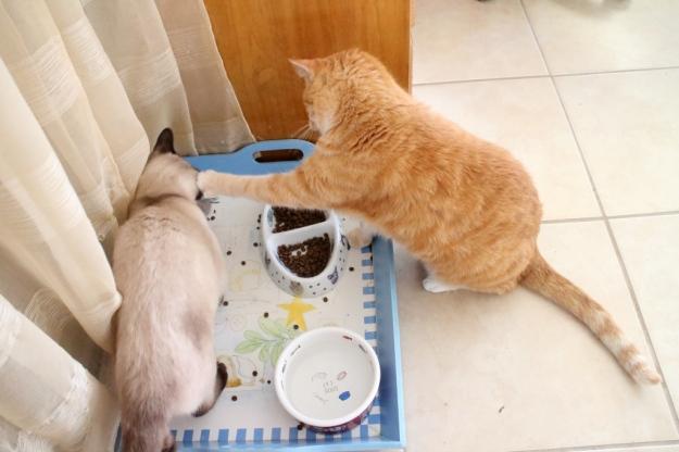 cats Floki and Chris