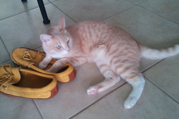 cat and shoes