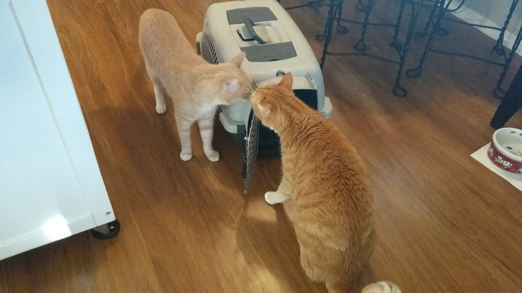 cats interested in carrier