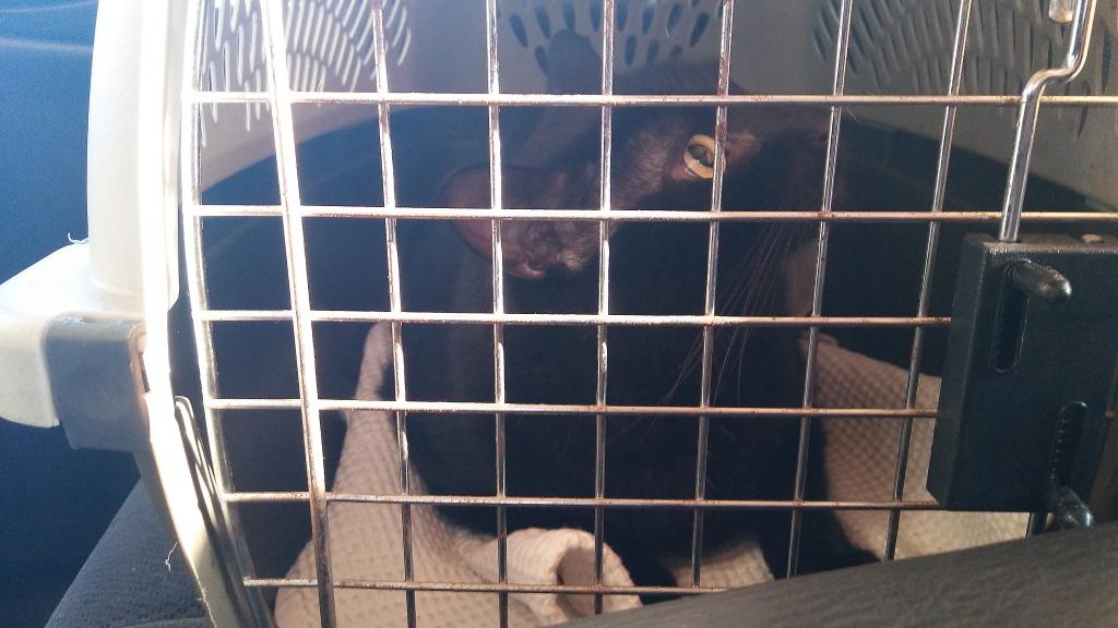Puck in cat carrier
